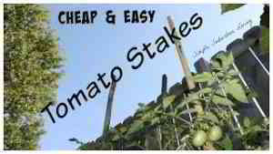 Cheap and Easy Tomato Supports - How to support large quantities of tomatoes