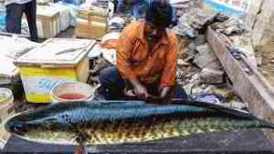 Live Fish Cutting Skills in Indian Fish Market   Fisherman