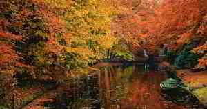 Idool Paisaje con árboles en otoño junto al canal (1920x1200)