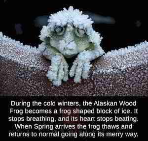 Frog freeze