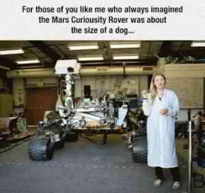 Big doggo