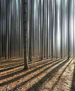 The way All the trees are lined up