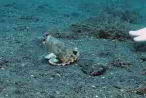 Diver convinces octopus to give up plastic cup for a new seashell.