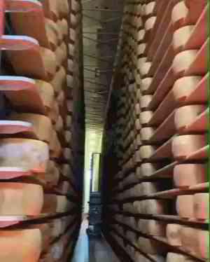 Cheesy room